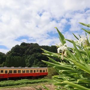 花咲く路 小湊鐵道 養老渓谷-上総中野