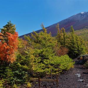 富士山 |吉田口登山道!馬返し~富士スバルライン5合目!道中道 御庭・奥庭紅葉トレッキングに挑戦!