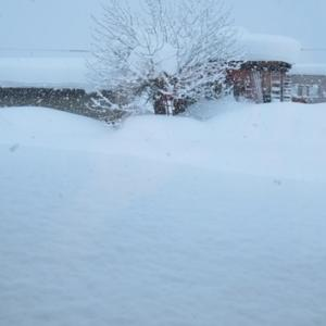 終盤なのにここにきて100cmほどの大雪