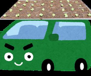ハクサイの苗も車中泊?(笑)