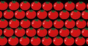 奥様はトマトで生きている 今年は長生き?