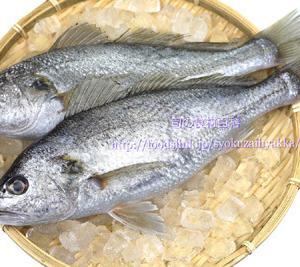 貰った魚が美味しくないのはなぜ?