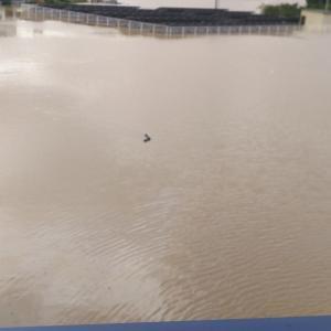 水害とラグビーとアオリイカ。