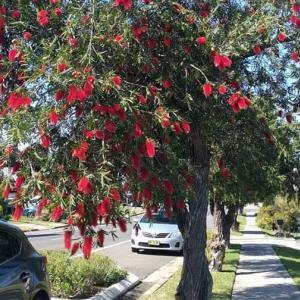 ウキウキの開花💓