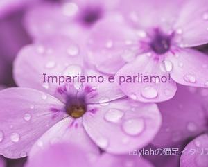 試してみようイタリア語!(996)~(1000)