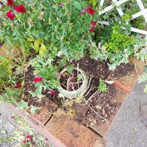 花壇を荒らしたのは・・・そして嗅覚