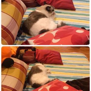 寝まーす(ΦωΦ)
