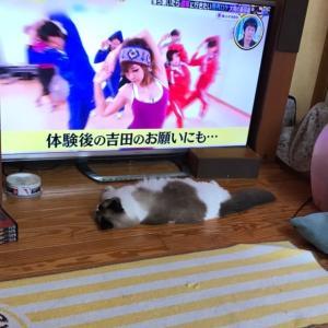 テレビ前で(ΦωΦ)