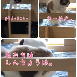 とじこめ〜(ΦωΦ)