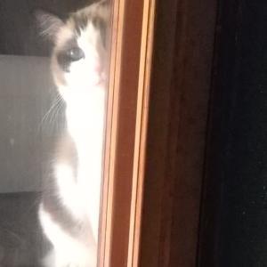階段に潜む猫(ФωФ)
