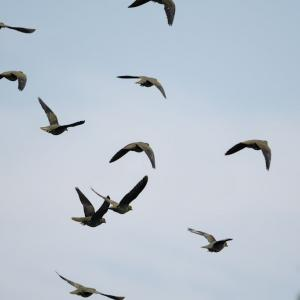今日は少しだけ鳥見