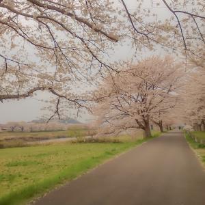 未来の東北を災害から守る桜プロジェクトを応援しています!