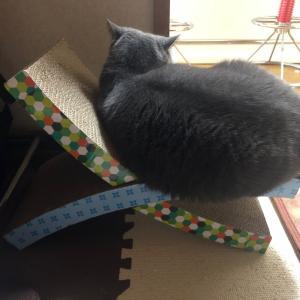 うどん は 猫。アメフラシではないぞ。