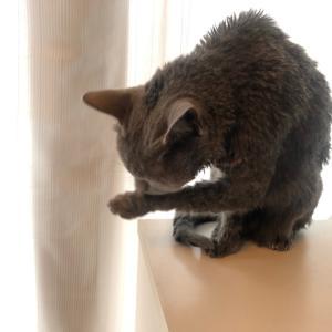 ざらめうどん 猫洗いの日