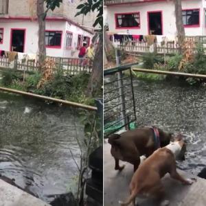 魚もびっくり! 大地震でゆっさゆっさ揺れるメキシコシティの運河