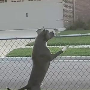 「愛犬と小鳥さんのほのぼの映像」をパクった犬