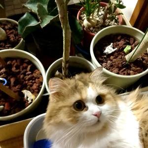 猫と観葉植物。