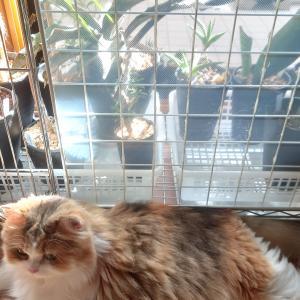 植物と薄い猫