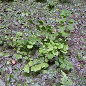 マンションのなかのちょっとしたスペースのさに観葉植物。