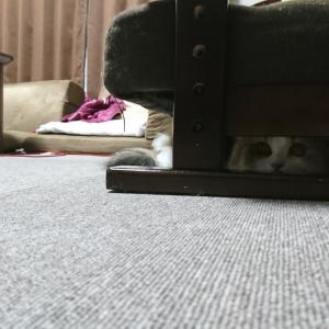 完璧に隠れた猫。