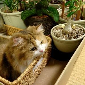 植物とこまる。