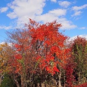 平岡公園樹芸センターの紅葉