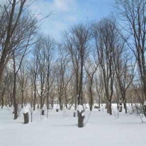 冬の散歩2