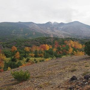 十勝岳の紅葉となきうさぎとエゾシマリス