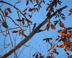 野鳥とエゾリス