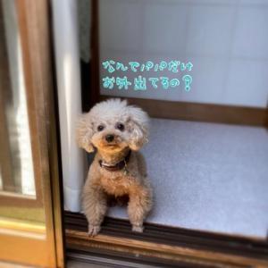 ぼくもお外出たい~ (⁎⁍̴̆Ɛ⁍̴̆⁎)