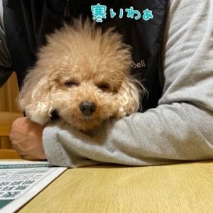 ほわわ (*´꒳`*)