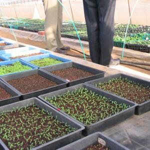 種子法に代わる熊本県独自の条例制定へ動き出す