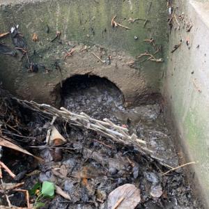 【箕面市】お寺の屋外排水管を清掃・高圧洗浄させていただきました!