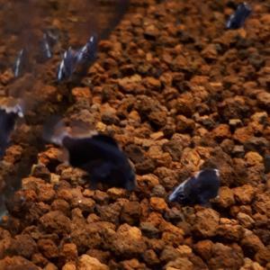 旬な魚が大量入荷❗