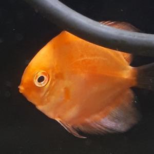 新しい魚が続々入荷❗