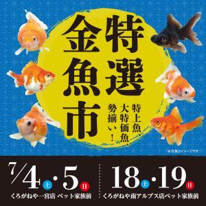 特選金魚市開催!