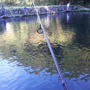 コバの愉快な釣り日記 小菅トラウトガーデン2❗