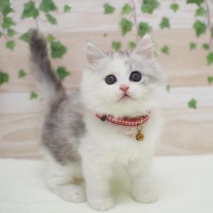 フェア開催中!新しく仲間入りした猫ちゃん☆