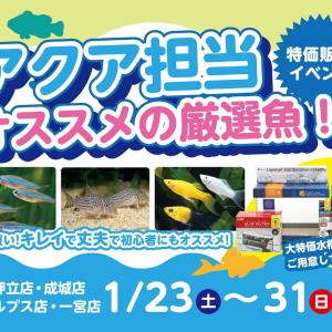 厳選熱帯魚セール!はっじまるよー!