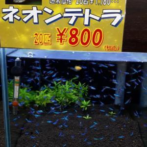 担当厳選魚セール!開催中!