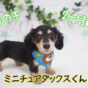 小型犬が人気です★