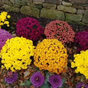 パンプキンと秋の花