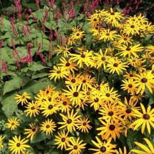 オランダのナチュラルガーデンの夏の花