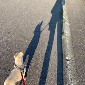いつかのお散歩