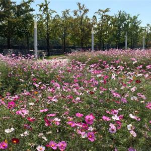 ソウルの秋の公園
