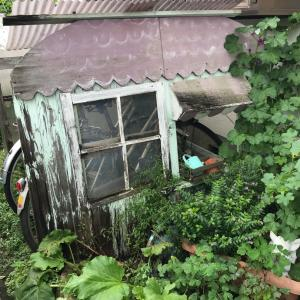 自転車小屋の撤去   リニューアル した庭   イングリッシュ風風⁇