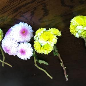 菊  マム⁇  庭咲いてる菊