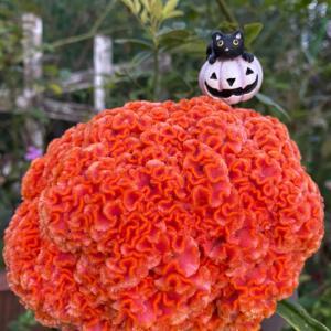 ハロウィン飾り メインガーデン1