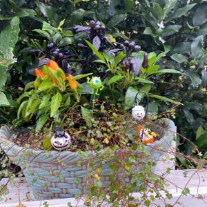ハロウィン準備中ガーデン