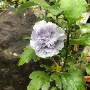 8月終わりの花壇